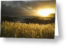 Sunlight Glowing At Sunset And Greeting Card