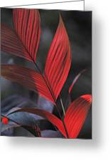 Sunlight Illuminates The Red Leaves Greeting Card