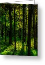 Sunlight In Forest Greeting Card
