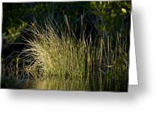 Sunlight On Grass Original Greeting Card