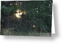 Sunlight Orbs 3 Greeting Card