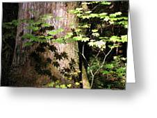 Sunlight Reaching The Forest Floor Greeting Card