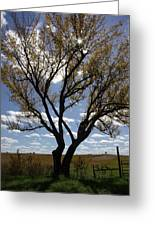 Sunlight Through The Tree Greeting Card