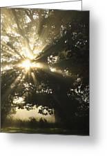 Sunlight Through Tree Cahir, County Greeting Card
