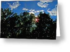 Sunlight Thrugh The Treetops Greeting Card