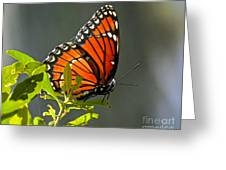 Sunlight Viceroy Greeting Card