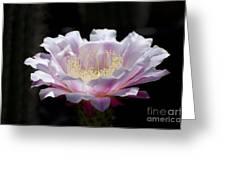 Sunlit Cactus Flower Greeting Card