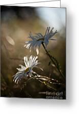 Sunlit Daisies Greeting Card
