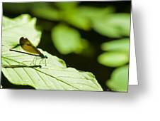 Sunlit Dragonfly Greeting Card