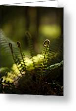 Sunlit Fiddleheads Greeting Card