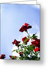 Sunlit Roses Greeting Card