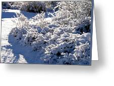 Sunlit Snowy Sanctuary Greeting Card