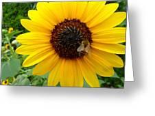Sunny Bee Greeting Card