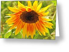 Sunny Bright Sunflower Greeting Card