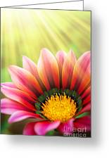 Sunny Daisy Greeting Card by Carlos Caetano