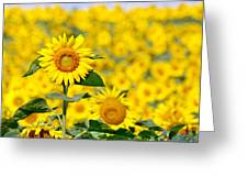 Sunny Disposition Greeting Card