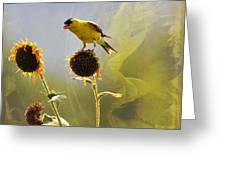 Sunny Finch Greeting Card