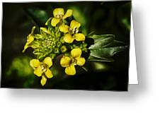 Sunny Floret Greeting Card
