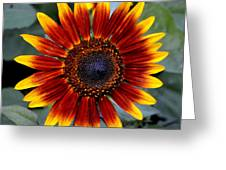 Sunny Flower Greeting Card