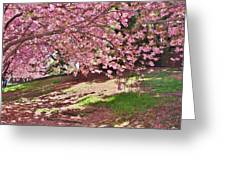 Sunny Patch Under The Cherry Trees Greeting Card