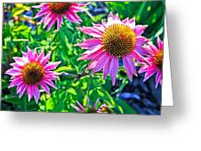 Sunny Pink Greeting Card