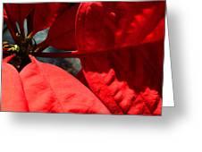 Sunny Poinsettia  Greeting Card