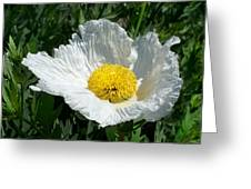 Sunny Side Flower Greeting Card