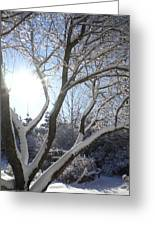 Sunny Snow Day 1 Greeting Card