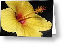 Sunny Yellow Hibiscus Flower Greeting Card