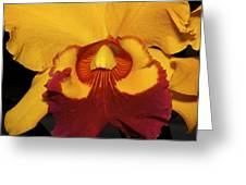 Sunny Yellow Orchid Greeting Card