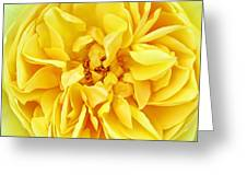 Sunny Yellow Rose With Petals And Stamens - Macro Flower Photography Greeting Card