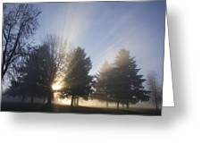 Sunray Through Trees And Fog Greeting Card