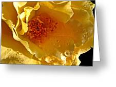 Sun Rays On The Yellow Petals Greeting Card