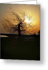 Sunrise And Tree Greeting Card