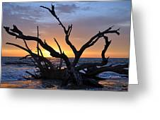 Sunrise At Driftwood Beach 5.2 Greeting Card