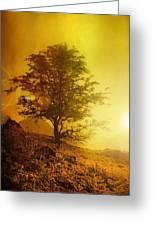 Sunrise Flare Greeting Card