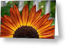Sunrise Floral Greeting Card