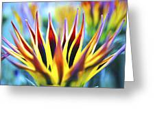 Sunrise Flower Greeting Card