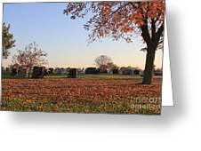 Sunrise In The Graveyard Greeting Card