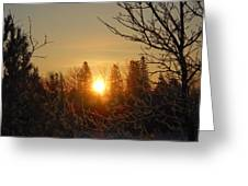 Sunrise In The Trees Greeting Card