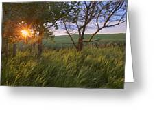 Sunrise On A Farm During The Summer Greeting Card