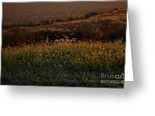 Sunrise On Wild Grasses II Greeting Card