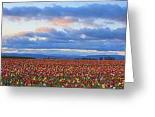 Sunrise Over A Tulip Field At Wooden Greeting Card