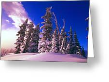 Sunrise Over Snow-covered Pine Trees Greeting Card