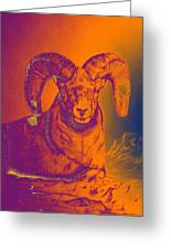 Sunrise Ram Greeting Card