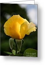 Sunrise Rosebud Greeting Card
