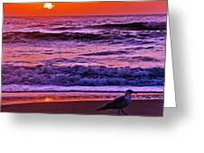 Sunrise Sea And Seagull Greeting Card