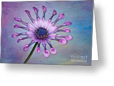Sunscape Daisy Greeting Card