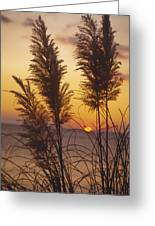 Sunset On The Mediterranean Sea And Plant Greeting Card