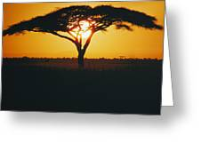 Sunset And Trees, Serengeti Plains Greeting Card
